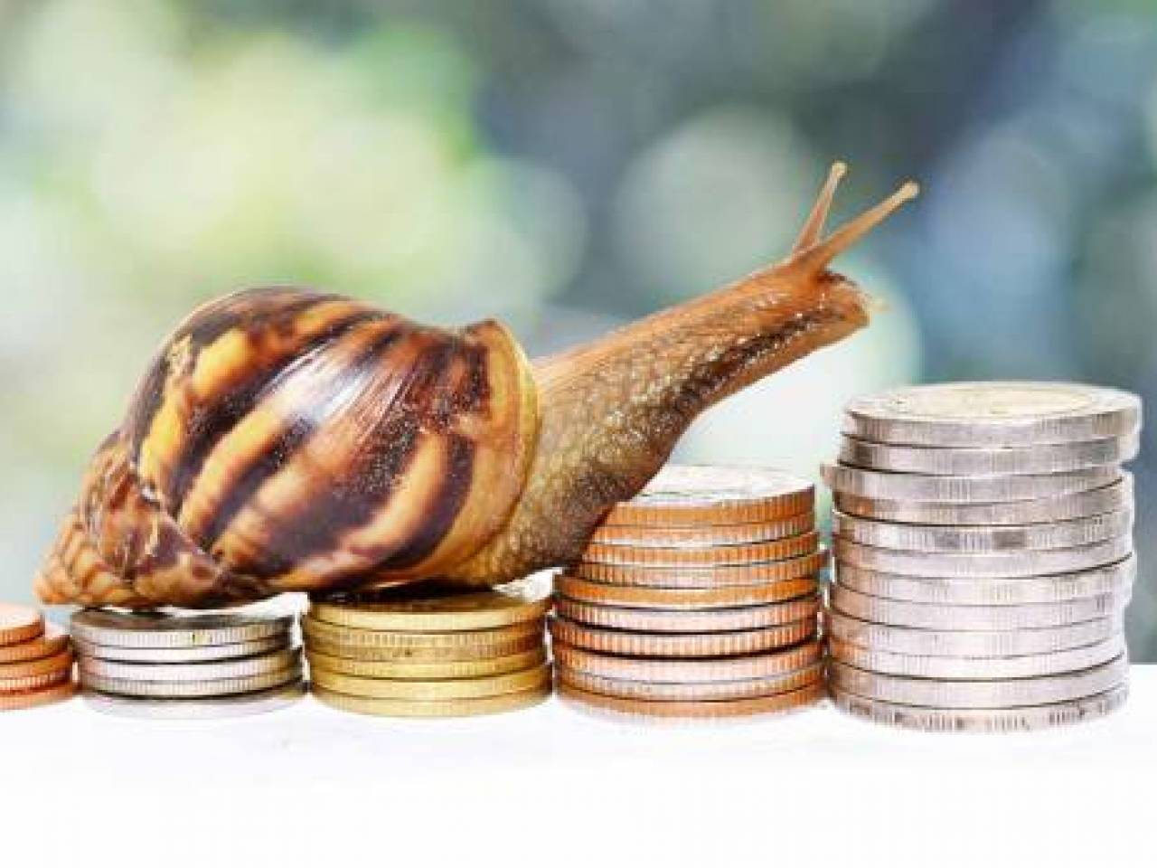Brown snail climbing the pile of coins