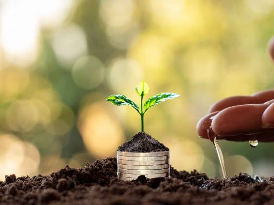 Tree with green leaves growing from coin and natural green background blurred finance and money management concept for SME.